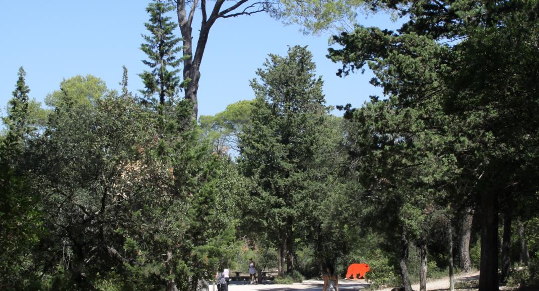 Allée du parc en descendant vers les lionnes