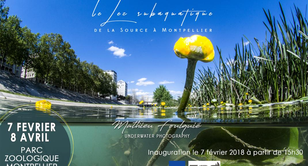"Exposition de photos ""le Lez subaquatique par Mathieu Foulquié"""