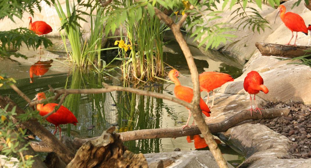 La serre amazonienne - Zoo de Montpellier